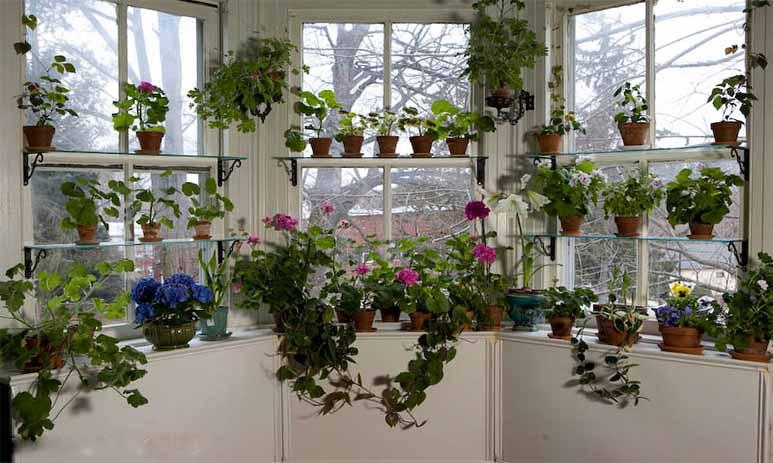 Энергия растений на страже вашего дома